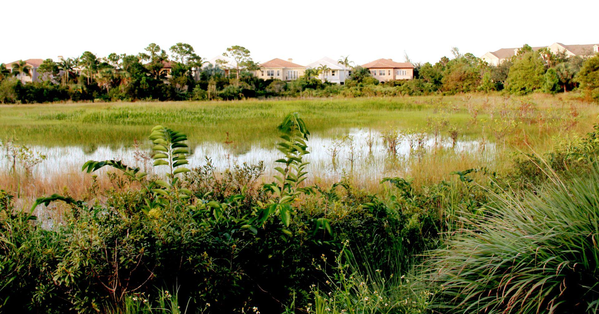 Botanica Wetland