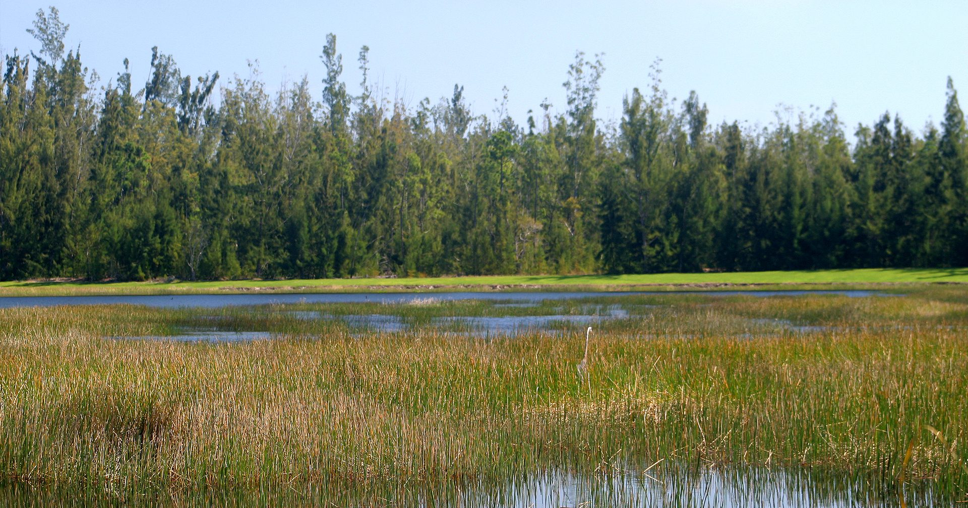 The King's Academy Wetland